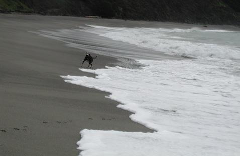 Surf Hound (photo by AK)
