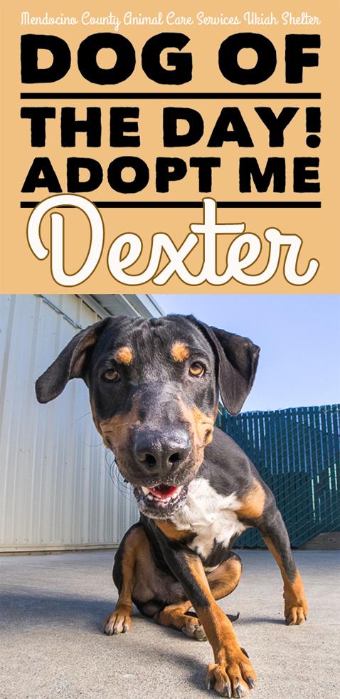 DogDexter