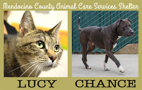Lucy&Chance