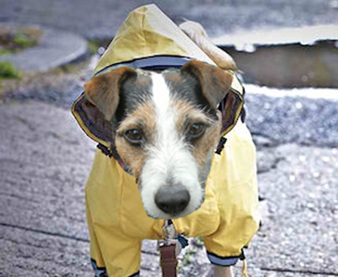 dogwithraincoat2