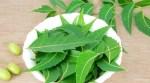 Neem-leaves1-600×330