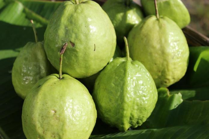 Ripe guava fruit