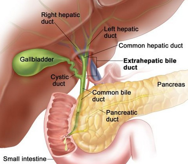 Anatomy-of-Gall-bladder