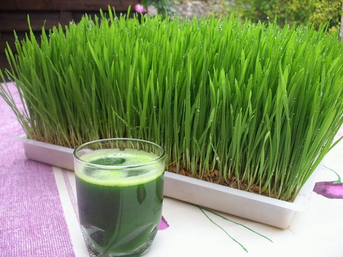 Wheat-grass-juice-benefits