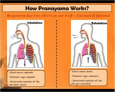 How does Pranayama works