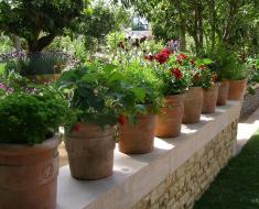 Kitchen garden with pots
