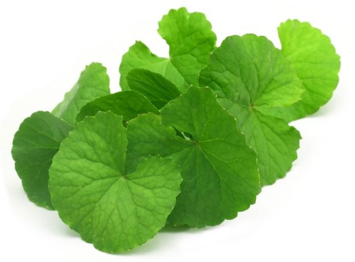 leaves of brahmi
