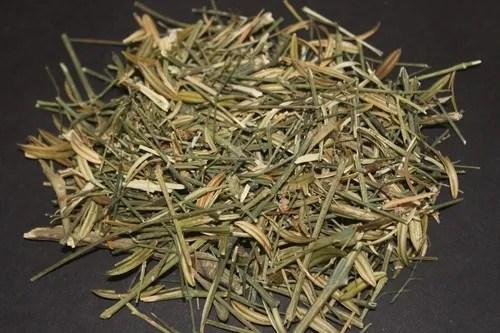 dried chirata plant