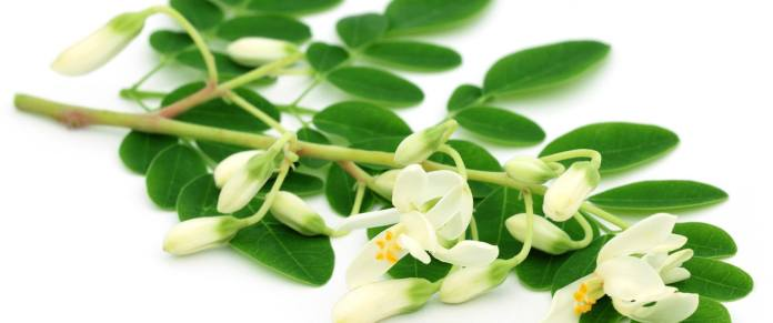 Moringa leaves and flowers