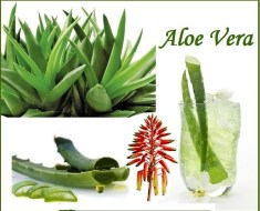 Top 10 Health Benefits of Aloe Vera | Top 10 Home Remedies