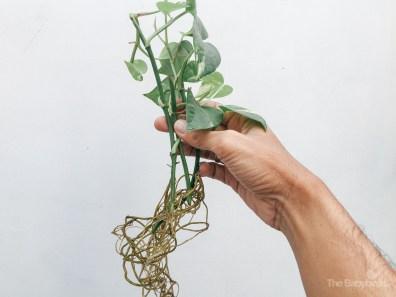 gardening-27