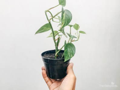 gardening-31