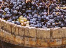 What Makes Natural Wine Natural?
