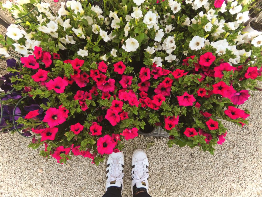 Mostra dei fiori Firenze