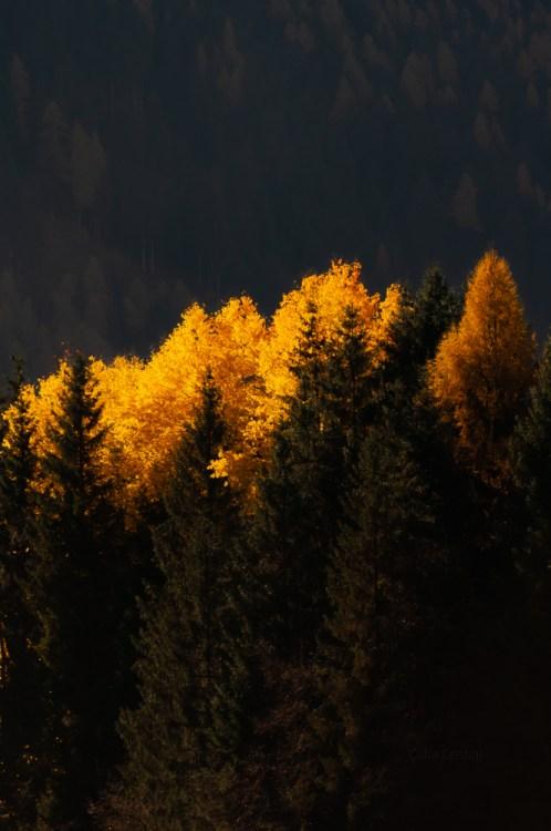 Foliage Moena
