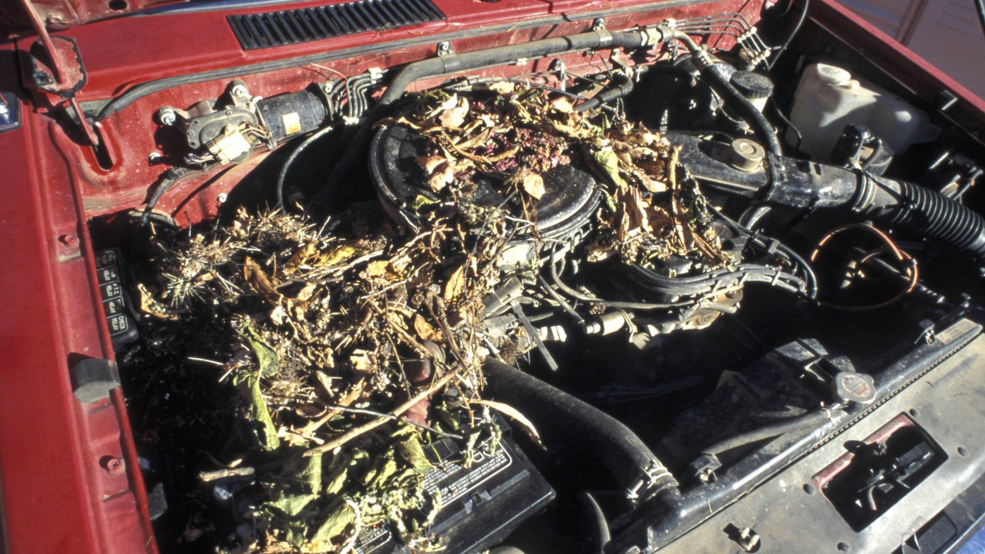 hight resolution of vw engine choke wiring