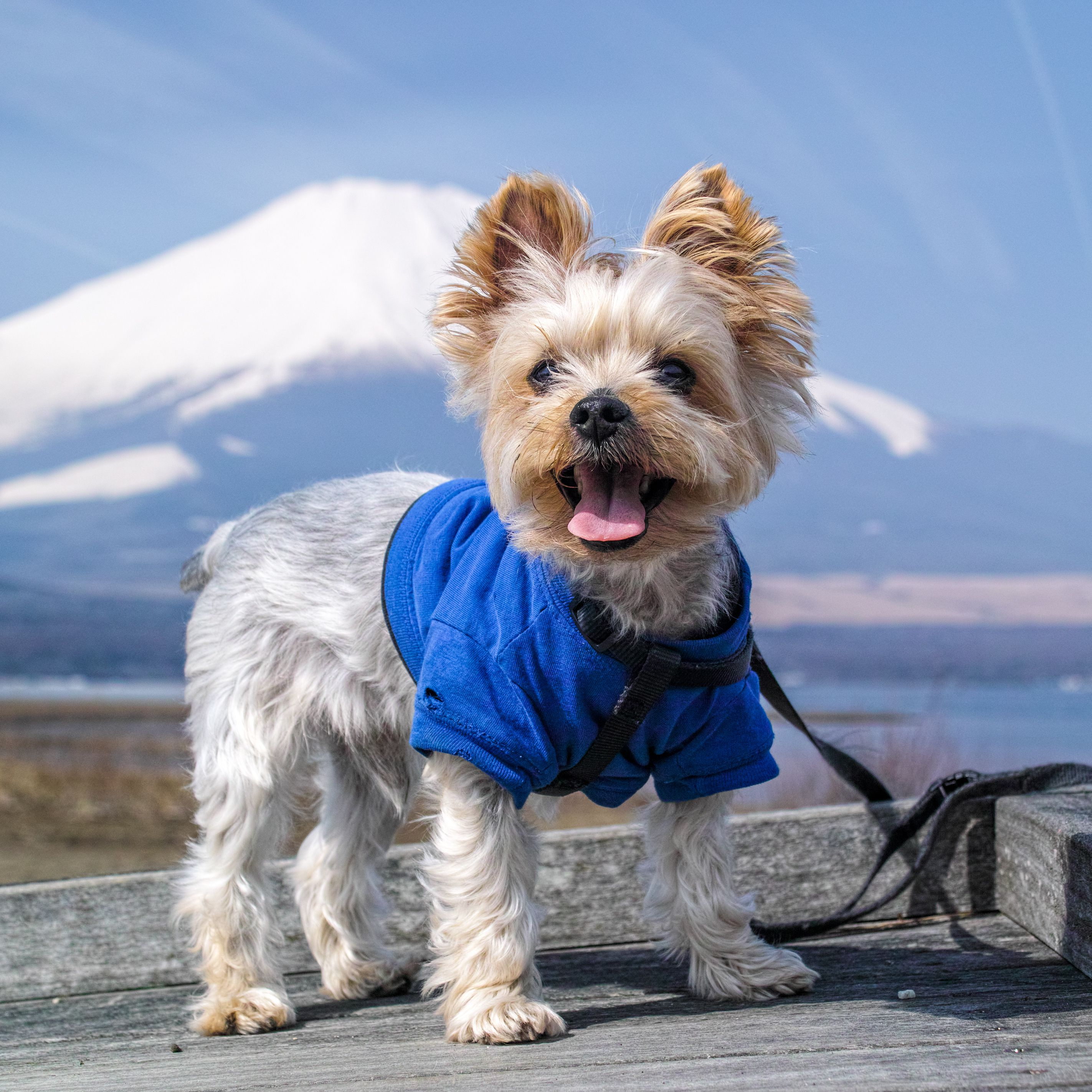 It's dog coat season, y'all! How To Start A Pet Apparel Design Business