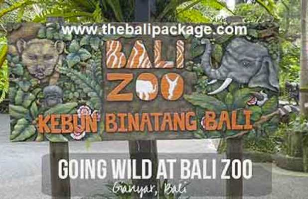 Bali Zoo Park Packages