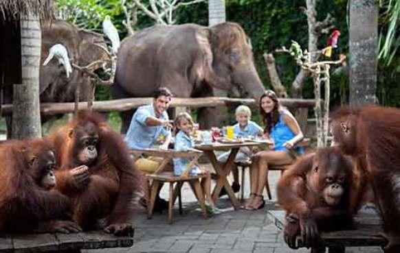 Breakfast With Orangutans At Bali Zoo Bali Zoo Park