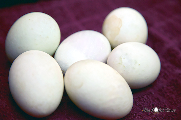 How to eat balut