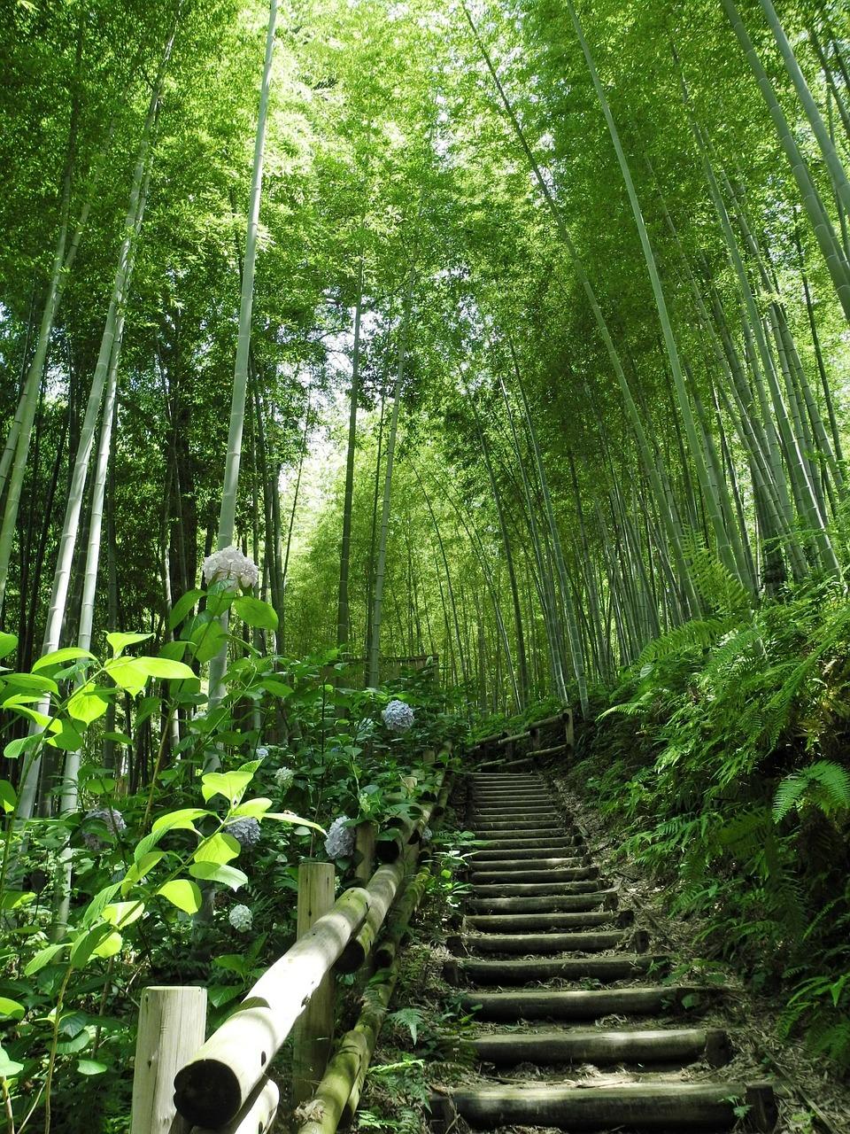Bamboo forest, the bambu shop online