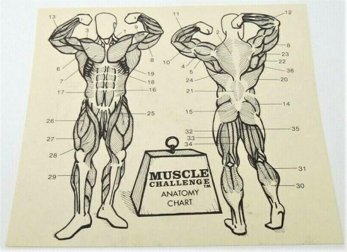 Muscle Challenge game anatomy chart