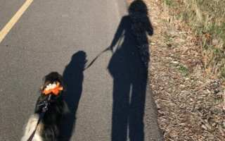 loose leash walking image