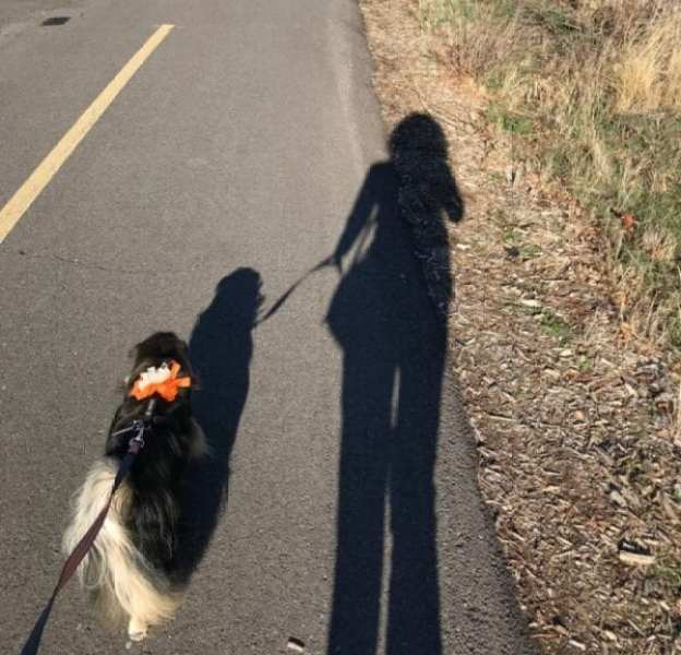 loose leash walking image