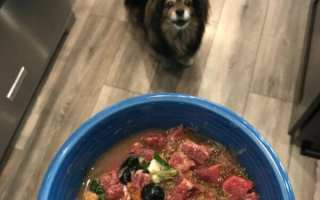 happy dog looking at bowl of raw beef, vegetables and blueberries for dinner