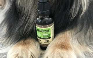 CBD oil for dogs picture