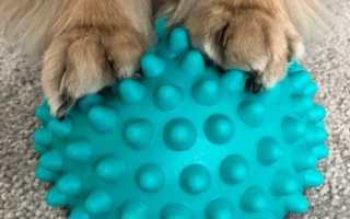 little dog paws standing on blue FitPAWS Paw Pod