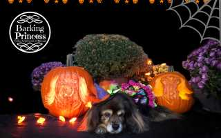 Dog in witch hat with two jack-o-lanterns carved as dog-o-lanterns with Barking Princess logo