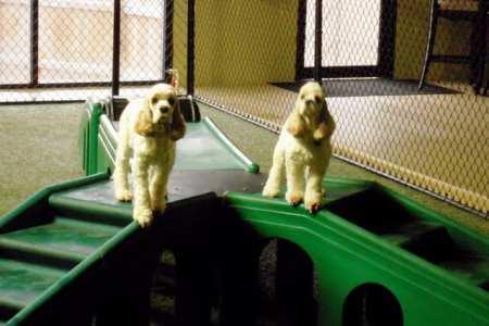 dog daycare image