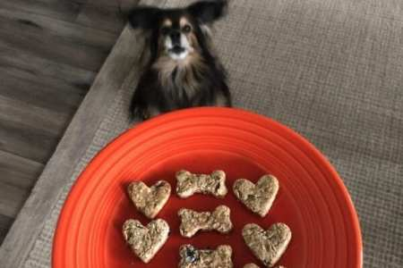 happy dog with homemade cookies in shapes of hearts and bones on orange plate