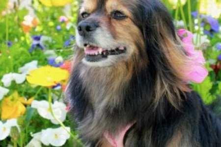 beautiful dog photo