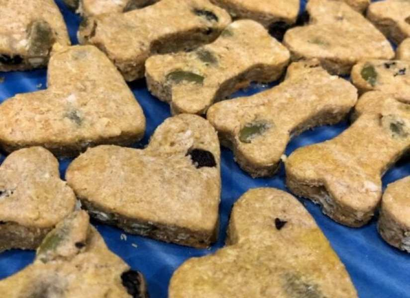 photo of blueberry pepita quinoa homemade cookies for dogs
