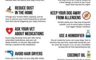 dog dry skin infographic of remedies for itching created by the absorber dog lovers towel