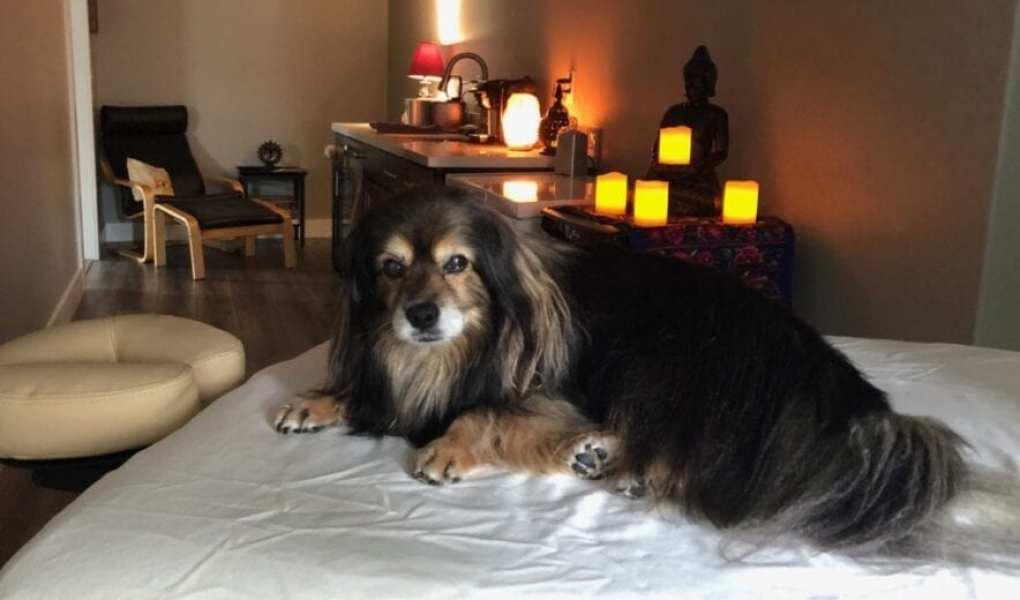 image of dog massage