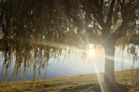 image of sun setting on a pond behind a willow tree