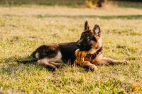 Best Dog Bed for German Shepherd - BarkSpace