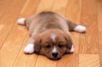Choosing The Best Hardwood Floors For Dogs - The Basic ...