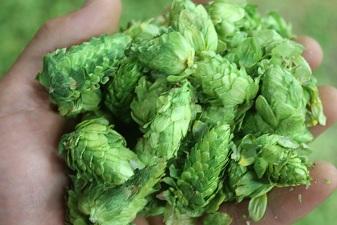 A Handfull of Hops
