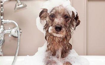 Cómo bañar a tu mascota y dejar el baño como nuevo