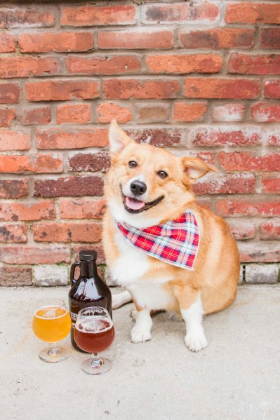 Murray Pup the Official Brew Pup
