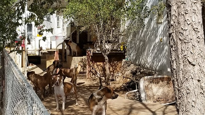 17 Dogs Removed From Kingman Home The Bee The Buzz In Bullhead City Lake Havasu City