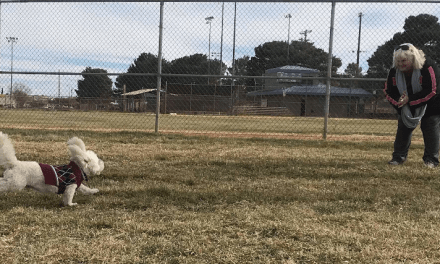 Pooches Approve Of Kingman's Newest Dog Park
