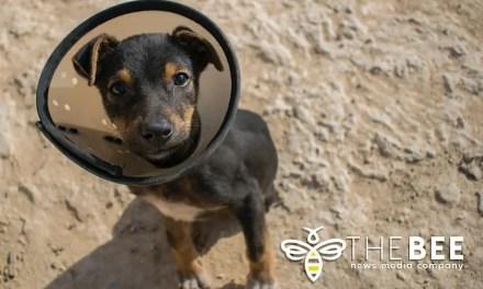 Animal Care & Welfare