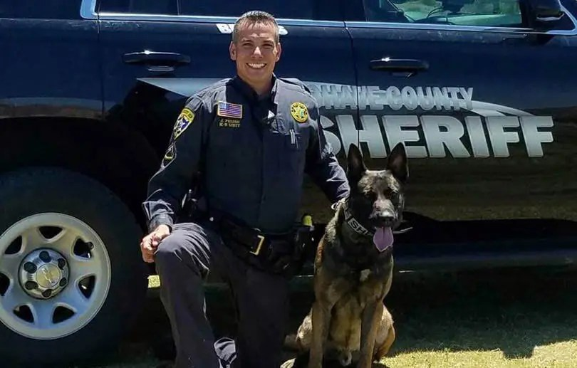 K9 Brutus Cleared for duty
