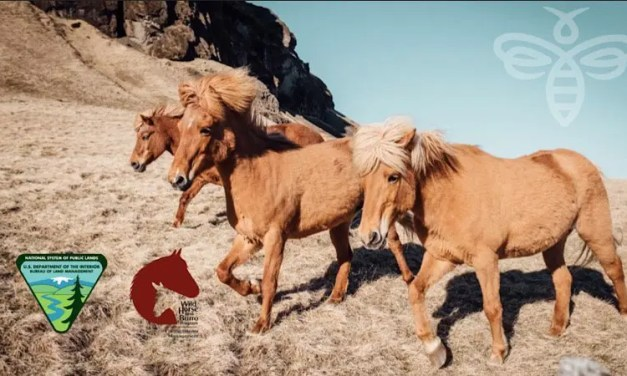 BLM Seeks Nominations to Fill Vacancies on National Wild Horse and Burro Advisory Board