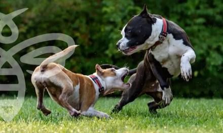 Animal Care and Welfare – Dog Bite